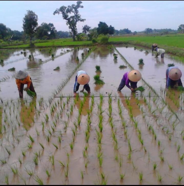 Poktan Tuwirikulon Ajukan Bantuan Benih ke Dinas Pertanian
